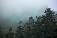 黒部立山アルペンルート 霧の掛かった森林