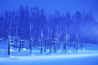 北海道 青い池ライトアップ