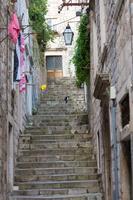 ドゥブロヴニク旧市街の急階段を上る猫