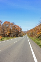 北海道 紅葉を突き抜ける一本道