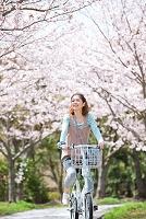 桜並木で自転車に乗っている日本人女性