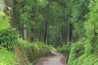 栃木県 初夏の日光杉並木