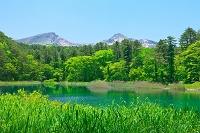 福島県 新緑のるり沼