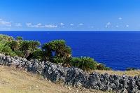 沖縄県 ソテツと青い海 南牧場 与那国島