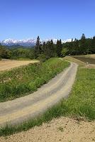 長野県 残雪の後立山連峰と農道
