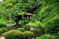 京都府 毘沙門堂