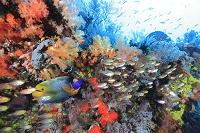 インドネシア コモド諸島 サンゴ礁の風景