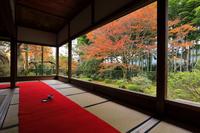 京都府 宝泉院 額縁庭園