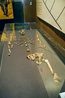 エチオピア アディスアベバ 国立博物館 ルーシーのレプリカ