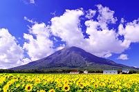 北海道 羊蹄山とヒマワリ畑