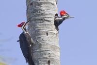 アメリカ フロリダ 野鳥