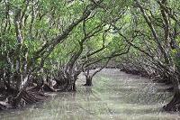 鹿児島県 マングローブ原生林