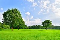 青空の白い雲と新緑と芝生の丘