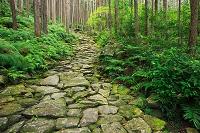 三重県 熊野古道散策路