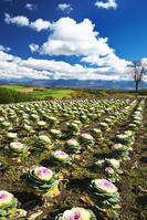 北海道 十勝岳連峰と四季彩の丘