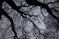 栃木県 大木と枝先