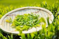 静岡県 一番茶の茶葉