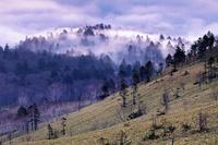 北海道 早朝の雲海に浮かぶ森(美幌峠より-屈斜路湖)