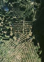 ブラジル アマゾンの森林伐採(2001年撮影)