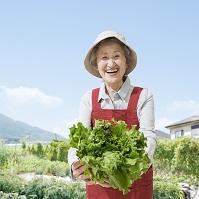 野菜を持って畑に立つシニア日本人女性