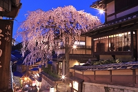 京都府 サクラの咲く三年坂