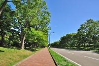 北海道 札幌市 野幌森林公園