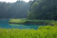 福島県 新緑の弁天沼