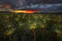 ブラジル ヴェアデイロス平原国立公園