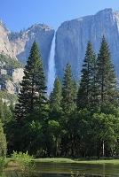 アメリカ合衆国 ヨセミテ滝と樹木