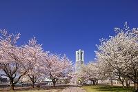 神奈川県 横浜 みなとみらい ランドマークタワー