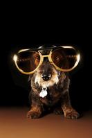 サングラスをつけている犬