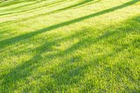 緑の芝生に光