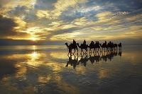 オーストラリア ラクダツアー