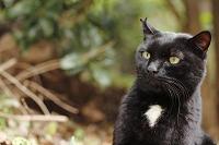 兵庫県 三宮 猫