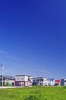 北海道 家並みと緑の草原