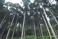 水源かん養保安林 兵庫県