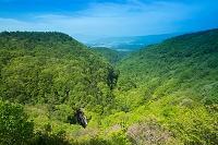 長野県 新緑鮮やかな春の王滝