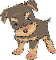 犬 ヨークシャーテリア