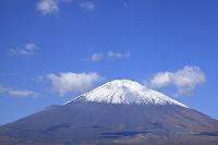 静岡県 御殿場市 冠雪の富士山と青空