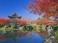 京都府 紅葉の東寺の金堂と講堂