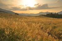 奈良県 曾爾高原のススキ