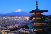 山梨県 新倉山浅間公園 夜明けの富士山と桜咲く忠霊塔
