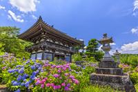 京都府 観音寺