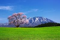 岩手県 一本桜と岩手山