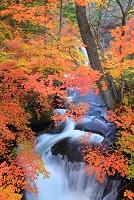 栃木県 日光 竜頭の滝