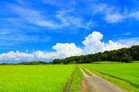 千葉県 水田と夏空