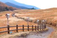 奈良県 曽爾村 曽爾高原 ススキ