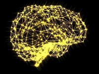 脳の神経系 CGイラスト