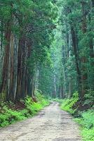 栃木県 日光 杉並木街道 特別保護地域