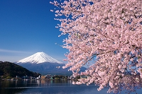 山梨県 桜と富士山
